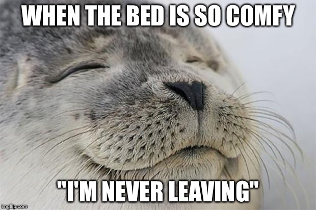 "Satisfied Seal Meme | WHEN THE BED IS SO COMFY ""I'M NEVER LEAVING"" 