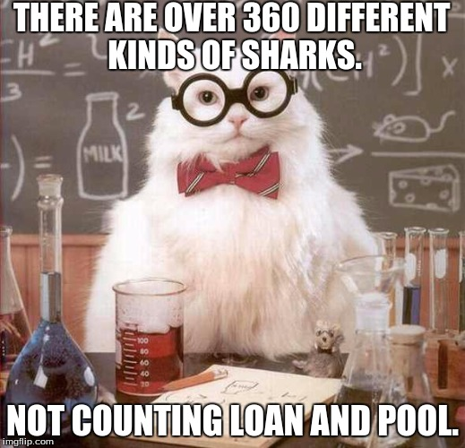 But Loan and Pool are the worst kind! | THERE ARE OVER 360 DIFFERENT KINDS OF SHARKS. NOT COUNTING LOAN AND POOL. | image tagged in cat scientist,sharks,we're gonna need a biggerboat,duuhn duhn duhnduhndudhnduhn,dadada,jaws the movie | made w/ Imgflip meme maker