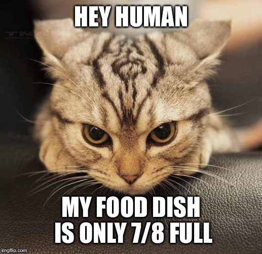 HEY HUMAN MY FOOD DISH IS ONLY 7/8 FULL | image tagged in mad cat | made w/ Imgflip meme maker
