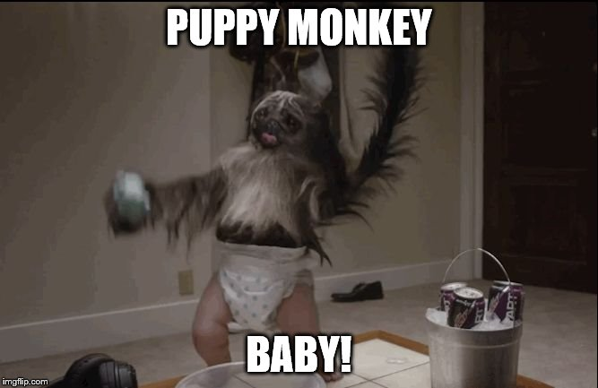 Puppy monkey baby  | PUPPY MONKEY BABY! | image tagged in puppy monkey baby | made w/ Imgflip meme maker