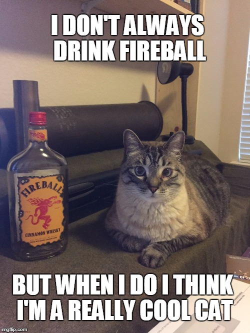 FIREBALL MAKES YOU THE MOST INTERESTING CAT IN THE WORLD | I DON'T ALWAYS DRINK FIREBALL BUT WHEN I DO I THINK I'M A REALLY COOL CAT | image tagged in cats,funny cats,whiskey,the most interesting cat in the world | made w/ Imgflip meme maker