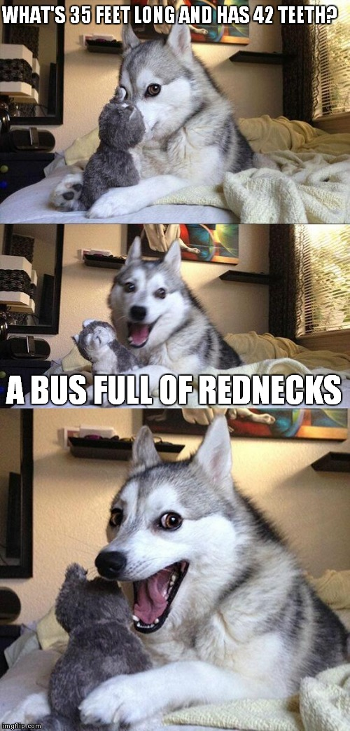 Bad Pun Dog | WHAT'S 35 FEET LONG AND HAS 42 TEETH? A BUS FULL OF REDNECKS | image tagged in memes,bad pun dog | made w/ Imgflip meme maker