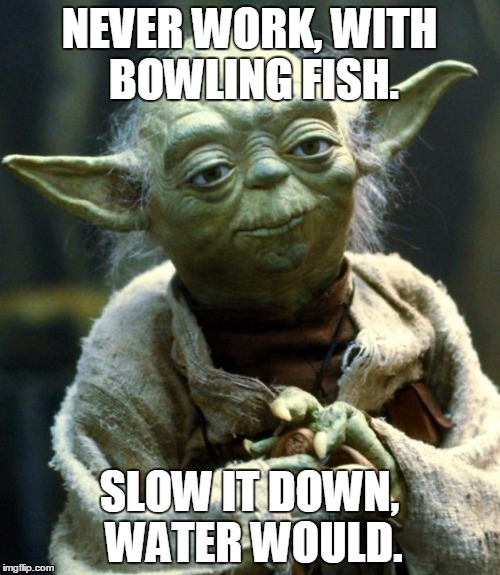 Star Wars Yoda Meme | NEVER WORK, WITH BOWLING FISH. SLOW IT DOWN, WATER WOULD. | image tagged in memes,star wars yoda | made w/ Imgflip meme maker