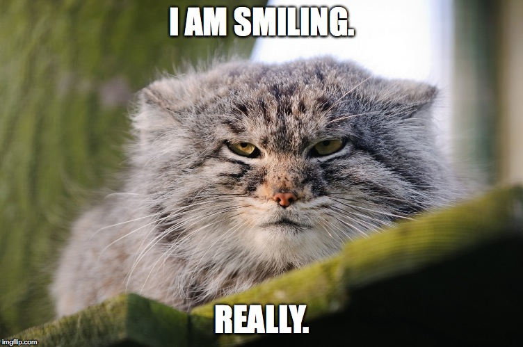 pallis's cat  | I AM SMILING. REALLY. | image tagged in really | made w/ Imgflip meme maker