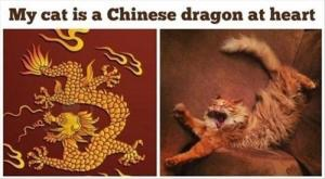 MY CAT IS A CHINESE DRAGON AT HEART | image tagged in memes,dragon | made w/ Imgflip meme maker