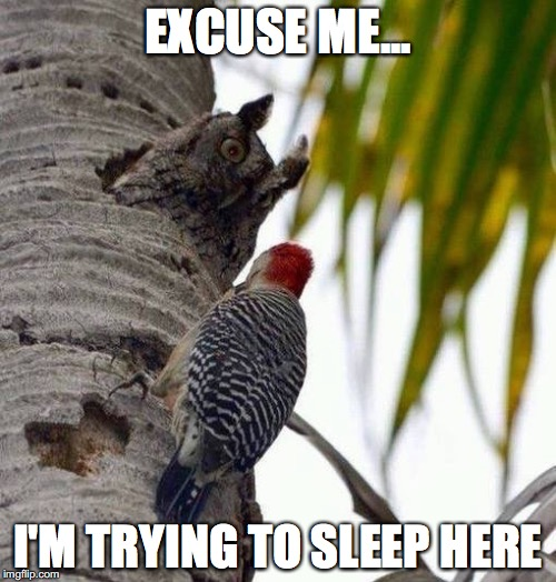 EXCUSE ME... I'M TRYING TO SLEEP HERE | image tagged in owl,no sleep | made w/ Imgflip meme maker