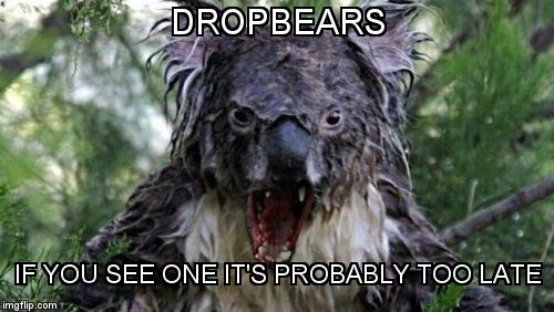 Angry Koala Meme | DROPBEARS IF YOU SEE ONE IT'S PROBABLY TOO LATE | image tagged in memes,angry koala,dropbear | made w/ Imgflip meme maker