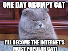 ONE DAY GRUMPY CAT I'LL BECOME THE INTERNET'S MOST POPULAR CAT! | made w/ Imgflip meme maker