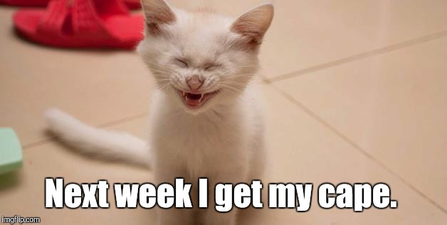 Cat Laughing | Next week I get my cape. | image tagged in cat laughing | made w/ Imgflip meme maker