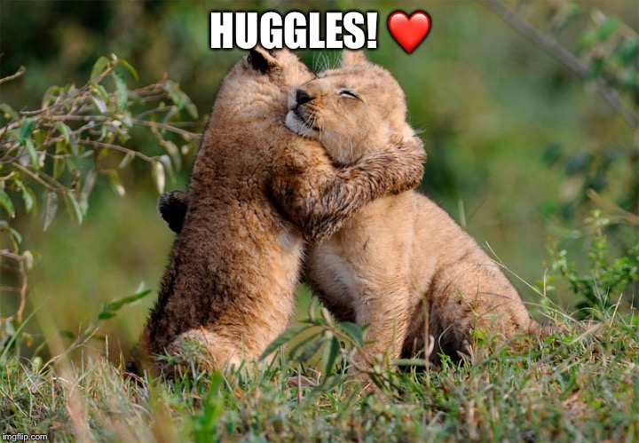 Aww! | HUGGLES! ❤️ | image tagged in cute,lion,big cat,hugs | made w/ Imgflip meme maker