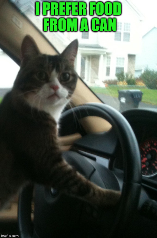 JoJo The Driving Cat | I PREFER FOOD FROM A CAN | image tagged in jojo the driving cat | made w/ Imgflip meme maker