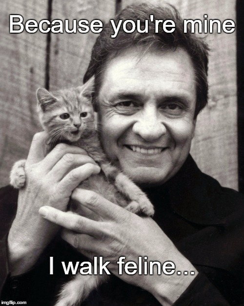 Happy Birthday, Johnny Cash!  | Because you're mine I walk feline... | image tagged in johnny cat,cats,johnny cash | made w/ Imgflip meme maker