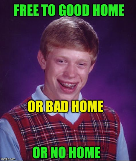 Bad Luck Brian Meme | FREE TO GOOD HOME OR NO HOME OR BAD HOME | image tagged in memes,bad luck brian | made w/ Imgflip meme maker