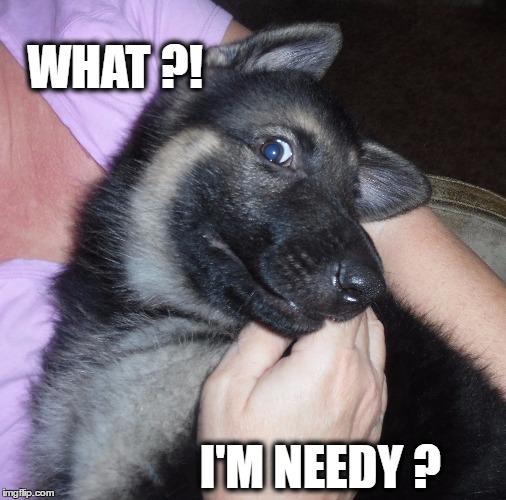 1kdz1m image tagged in cute puppy,funny puppy,german shepherd,needy imgflip