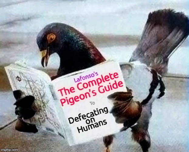 ...And The Poop Memes Don't Stop | K | image tagged in memes,pigeons,poop | made w/ Imgflip meme maker