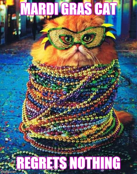 Mardi Gras Cat | MARDI GRAS CAT REGRETS NOTHING | image tagged in mardi gras | made w/ Imgflip meme maker