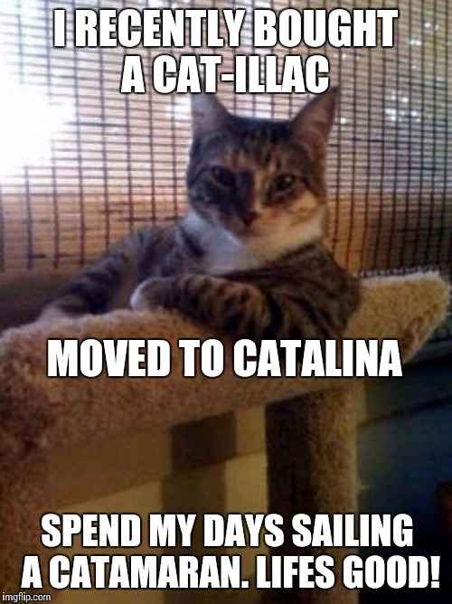 Things cats do | I RECENTLY BOUGHT A CAT-ILLAC SPEND MY DAYS SAILING A CATAMARAN. LIFES GOOD! MOVED TO CATALINA | image tagged in cats | made w/ Imgflip meme maker