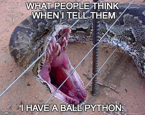 python | WHAT PEOPLE THINK WHEN I TELL THEM I HAVE A BALL PYTHON. | image tagged in python | made w/ Imgflip meme maker