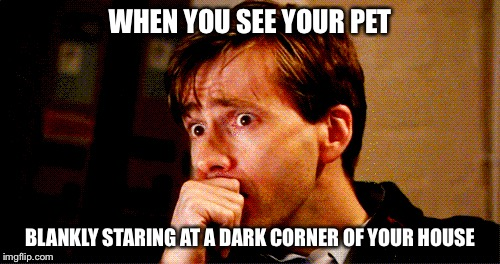 Demons... gotta be demons |  WHEN YOU SEE YOUR PET; BLANKLY STARING AT A DARK CORNER OF YOUR HOUSE | image tagged in pet humor | made w/ Imgflip meme maker
