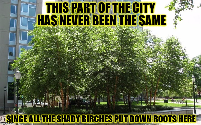 On the corner of Maple and Elm | THIS PART OF THE CITY HAS NEVER BEEN THE SAME SINCE ALL THE SHADY BIRCHES PUT DOWN ROOTS HERE | image tagged in memes,tree puns,multi-pun for ya | made w/ Imgflip meme maker
