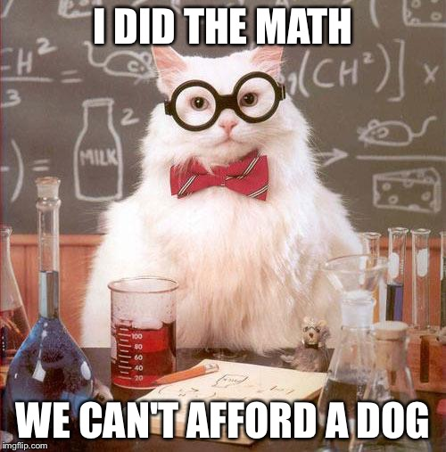 Science Cat | I DID THE MATH WE CAN'T AFFORD A DOG | image tagged in science cat | made w/ Imgflip meme maker
