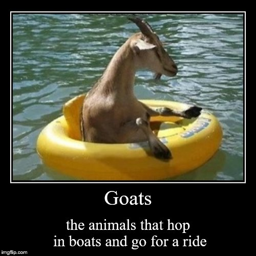 Goats | the animals that hop in boats and go for a ride | image tagged in funny,demotivationals | made w/ Imgflip demotivational maker