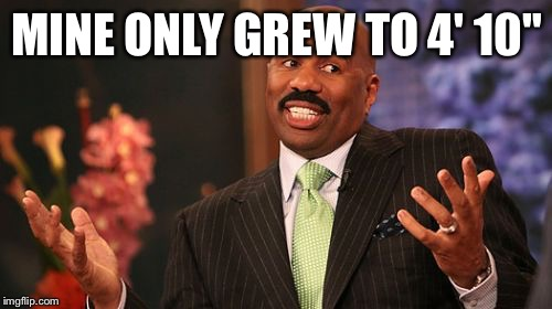Steve Harvey Meme | MINE ONLY GREW TO 4' 10"