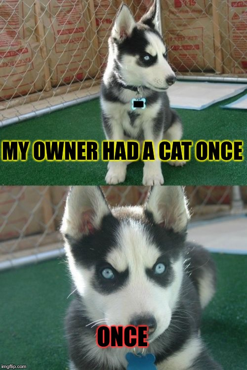 Insanity Puppy | MY OWNER HAD A CAT ONCE ONCE | image tagged in memes,insanity puppy | made w/ Imgflip meme maker