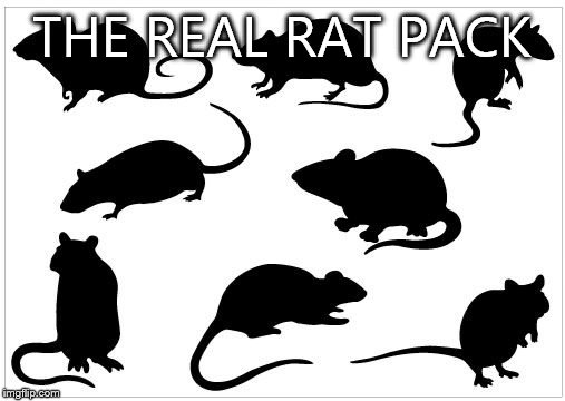 Rat pack week -( a Lynch1979 event) | THE REAL RAT PACK | image tagged in rat pack week,memes | made w/ Imgflip meme maker