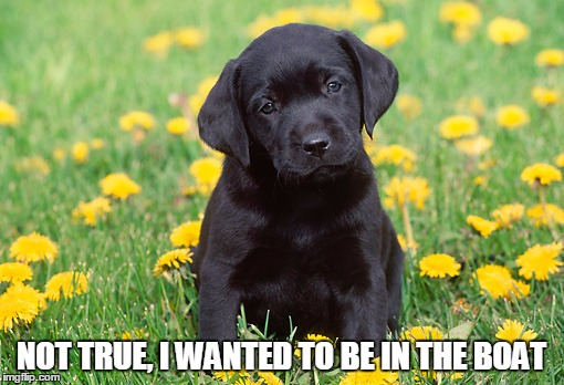 Black Labs Matter | NOT TRUE, I WANTED TO BE IN THE BOAT | image tagged in black labs matter | made w/ Imgflip meme maker