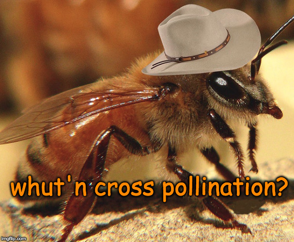 whut'n cross pollination? | whut'n cross pollination? | image tagged in what in tarnation,memes | made w/ Imgflip meme maker