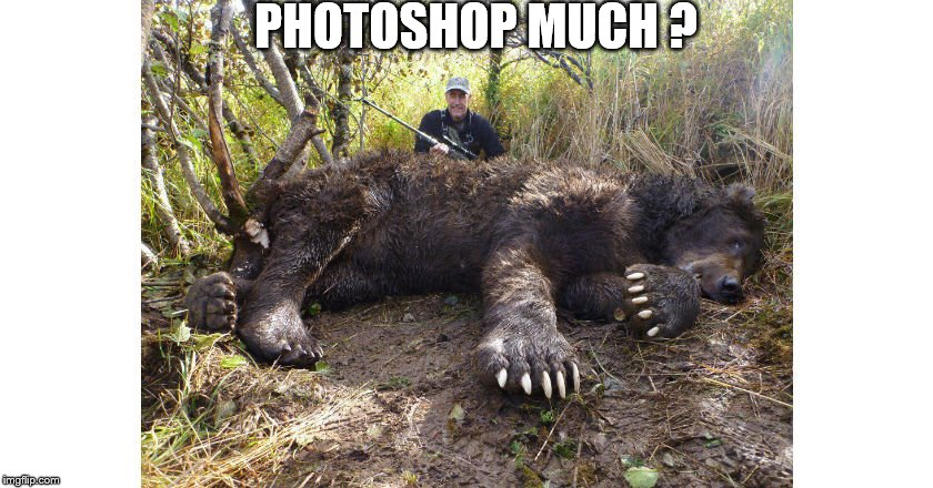 PHOTOSHOP MUCH ? | image tagged in bear,grizzly,kodiak,photoshop | made w/ Imgflip meme maker