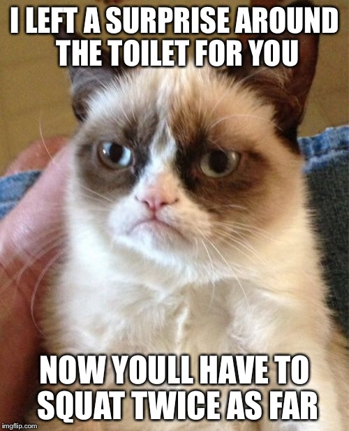 I LEFT A SURPRISE AROUND THE TOILET FOR YOU NOW YOULL HAVE TO SQUAT TWICE AS FAR | image tagged in memes,grumpy cat | made w/ Imgflip meme maker