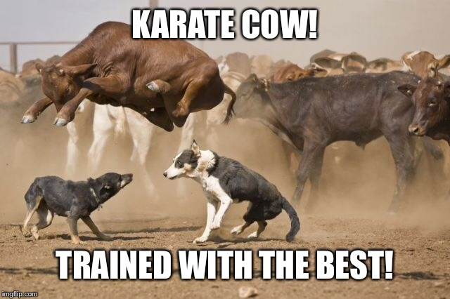 KARATE COW! TRAINED WITH THE BEST! | made w/ Imgflip meme maker