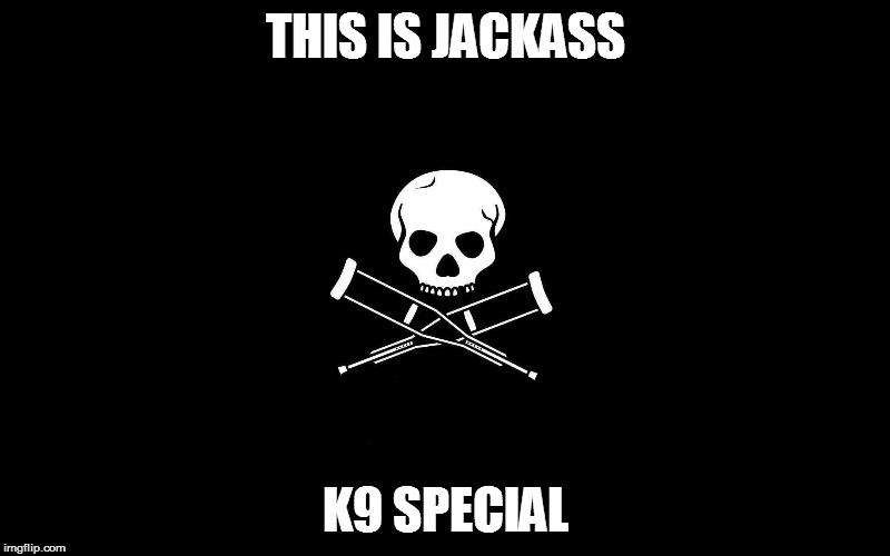 THIS IS JACKASS K9 SPECIAL | made w/ Imgflip meme maker