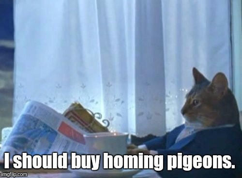 19mgfi.jpg | I should buy homing pigeons. | image tagged in 19mgfijpg | made w/ Imgflip meme maker