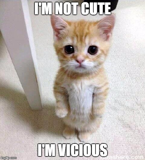 Cute Cat Meme | I'M NOT CUTE I'M VICIOUS | image tagged in memes,cute cat | made w/ Imgflip meme maker