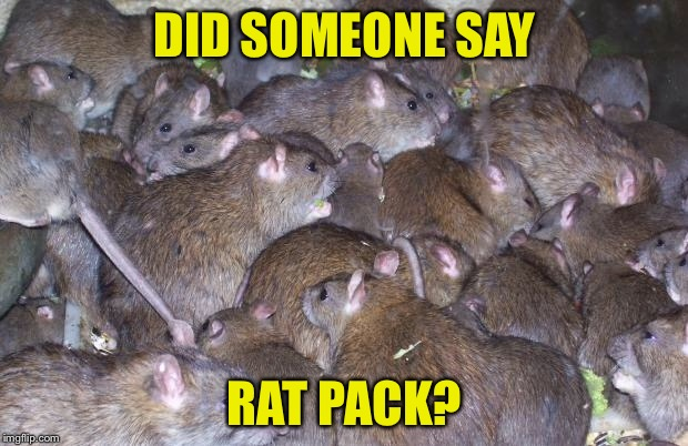 In honor of Rat Pack week | DID SOMEONE SAY RAT PACK? | image tagged in rats,rat pack week | made w/ Imgflip meme maker