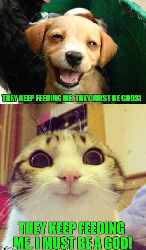 What cats and dogs think of humans | THEY KEEP FEEDING ME. I MUST BE A GOD! THEY KEEP FEEDING ME. THEY MUST BE GODS! | image tagged in animals,cats,dogs,funny | made w/ Imgflip meme maker