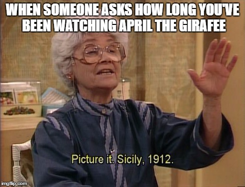 WHEN SOMEONE ASKS HOW LONG YOU'VE BEEN WATCHING APRIL THE GIRAFEE | image tagged in sophia picture it | made w/ Imgflip meme maker