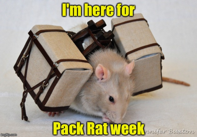 In honor of Rat Pack Week | I'm here for Pack Rat week | image tagged in rat pack week | made w/ Imgflip meme maker