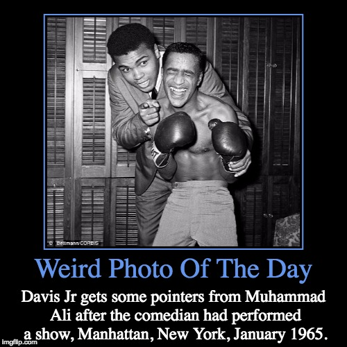 Put Them Up | Weird Photo Of The Day | Davis Jr gets some pointers from Muhammad Ali after the comedian had performed a show, Manhattan, New York, January | image tagged in funny,demotivationals,weird,photo of the day,lynch1979,rat pack week | made w/ Imgflip demotivational maker