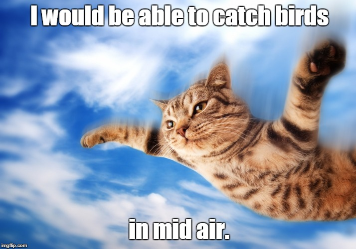 D3.jpg | I would be able to catch birds in mid air. | image tagged in d3jpg | made w/ Imgflip meme maker