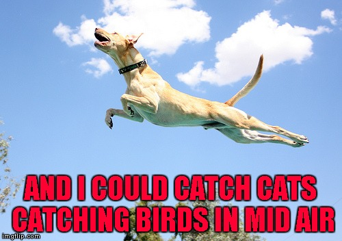 AND I COULD CATCH CATS CATCHING BIRDS IN MID AIR | made w/ Imgflip meme maker