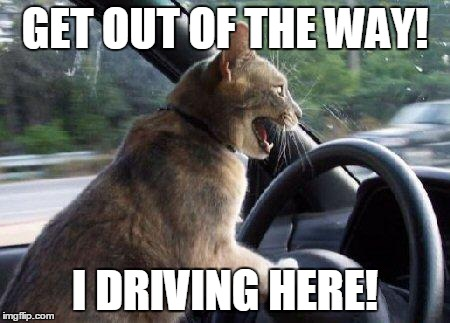 catsale | GET OUT OF THE WAY! I DRIVING HERE! | image tagged in catsale | made w/ Imgflip meme maker