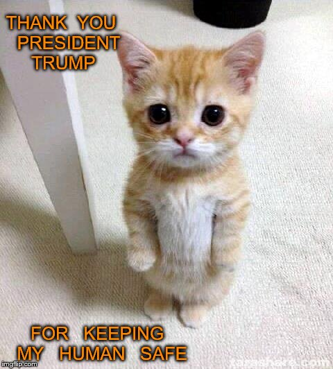 Cute Cat |  THANK  YOU   PRESIDENT   TRUMP; FOR   KEEPING  MY   HUMAN   SAFE | image tagged in memes,cute cat | made w/ Imgflip meme maker