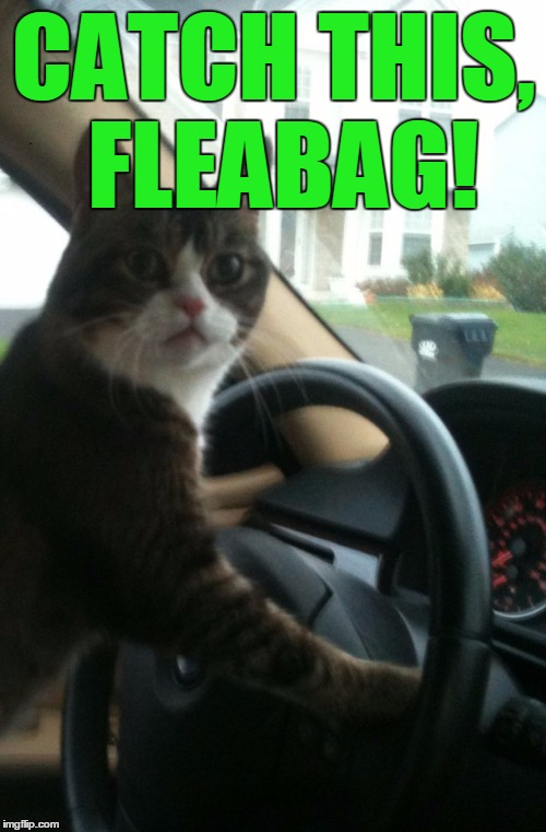 JoJo The Driving Cat | CATCH THIS, FLEABAG! | image tagged in jojo the driving cat | made w/ Imgflip meme maker
