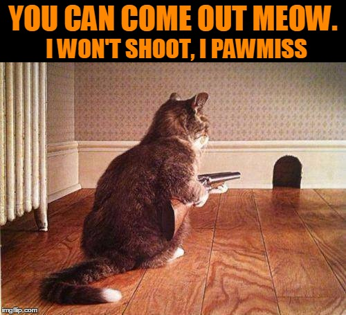 Cats are liars. | YOU CAN COME OUT MEOW. I WON'T SHOOT, I PAWMISS | image tagged in cats with guns | made w/ Imgflip meme maker