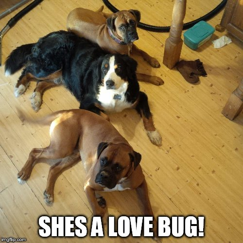 SHES A LOVE BUG! | made w/ Imgflip meme maker