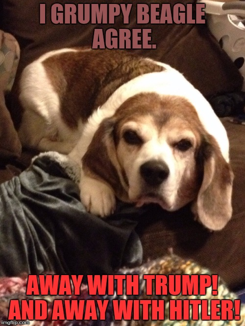 Grumpy Beagle | I GRUMPY BEAGLE AGREE. AWAY WITH TRUMP! AND AWAY WITH HITLER! | image tagged in grumpy beagle | made w/ Imgflip meme maker